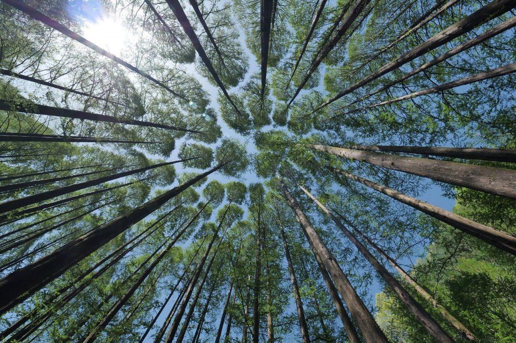 ondernemen-bos-bomen-wendy-koning