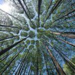 Als je als coach door de bomen het bos niet meer ziet in het ondernemen…